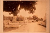 Aberthin village centre with tree, ca 1900