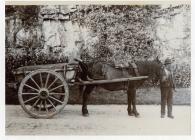 Horse and cart, ? Aberthin road, near Cowbridge