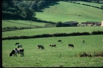 Pant Wilkin farm Aberthin 1976