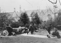 Felling of copper beech, Old Hall, Cowbridge...