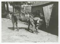 Shoeing a Horse, Nantllwyd