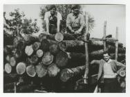 Carting Wood