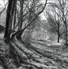 The old council road below Rhiwgreiddyn quarry