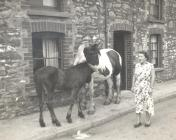Mrs Edna Willaims with Ponies from Sim's...