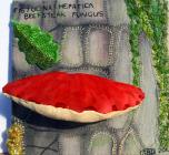 Beefsteak Fungus by Susan Davies