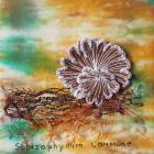 Split-Gill Fungus by Brenda Rees