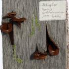 Jelly Ear by Elinor Tourlamain
