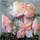 Pink Wax-cap by Jenny Hills