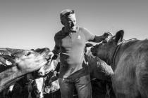 """Beef Cattle Farmer Paul Williams"", Llanwrst -..."