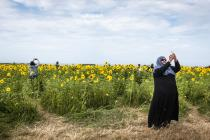 """Sunflowers and Selfies"", Rhossili, Gower –..."
