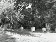 Beehives, Ceinws / Esgairgeiliog, May 2004