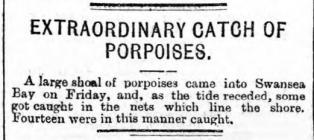 Extraordinary catch of porpoises - Article from...