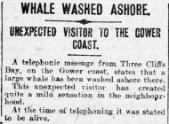 Whale washed ashore - Erthygl o The Cambria...