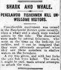 Shark and Whale - Erthygl o The Cambria Daily...
