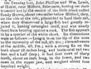 White Shark - Article from The Cambrian, 1822