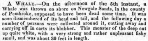 A Whale - Article from The Cambrian, 1833
