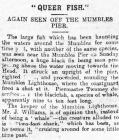 Queer Fish - Article from The Cambrian, 1906