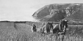 Harvesting above Ceibwr c1950 and 2014