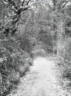 Ceinws/Esgairgeiliog Forestry Commission road