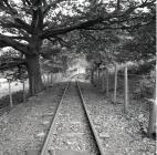 Rheilffordd Corris rhwng Corris a Maespoeth