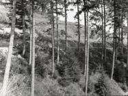 Above Blaen Glesyrch, Ceinws / Esgairgeiliog