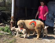 Rainbow Sheep, COVID 19, 2020