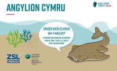 Angylion Cymru, eLyfr rhyngweithiol Maelgwn, 2020