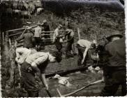 Sheep washing, Cwmlicky, Pontypool
