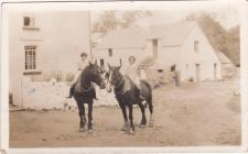 Working Horses at Ffynnongog