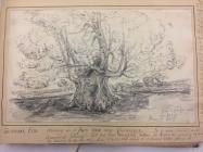 Tre Vychan elm, Penllyn, nr Cowbridge 1865