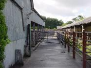 Cowbridge cattle market