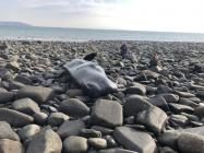 Stranding of a sperm whale, 2019