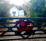 Poppy on a gate by Davy Turner, 2020