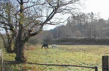 Meadow near Abercraf (Abercrave) Upper Swansea...