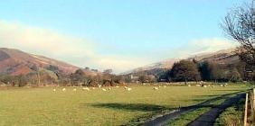 Sheep in the Welsh Landscape Breconshire &...