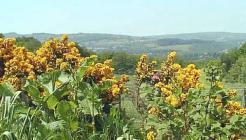 Across the Swansea Valley Near Ystradgynlais...