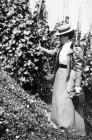 Woman picking grapes, Llangibby House, early 1900