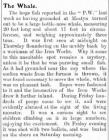 The Whale - Article from Prestatyn Weekly, 1907