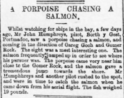 A Porpoise chasing a Salmon - Article from The...