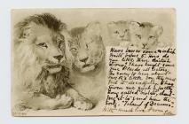 Cerdyn post o deulu o lewod, 1901