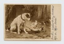 "Postcard of dog and chickens : ""A pushing..."