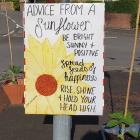 Advice From A Sunflower, COVID 19, 2020