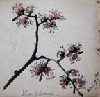 Elm flower, March 17th, 1894 by Annie Cummings