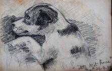Dog 'Little Mit Tenie. Sep 26th, 1893 by...