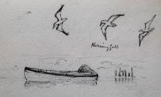 Herring gull by Beatrice Cummings