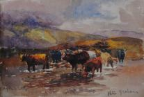 Highland cattle by Beatrice Cummings