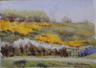 Gorse and blackthorn, May 10th by Beatrice...