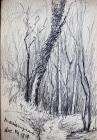 Row of trees, Dec 14th, 1919 by Beatrice Cummings