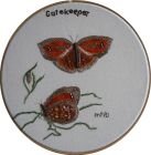 Gatekeeper/Hedge Brown by Margaret Buen