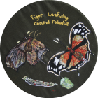 Tiger Leafwing by Margaret Thomas